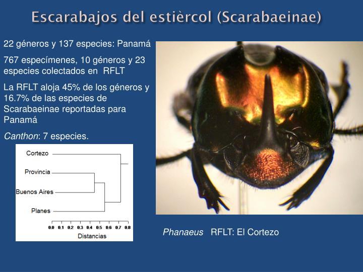 Escarabajos del