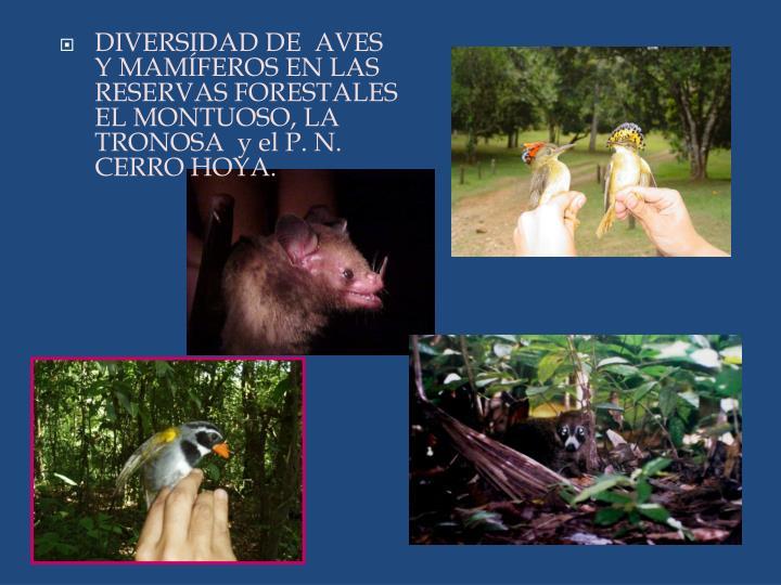 DIVERSIDAD DE  AVES Y MAMÍFEROS EN LAS RESERVAS FORESTALES EL MONTUOSO, LA TRONOSA  y el P. N. CERRO HOYA.