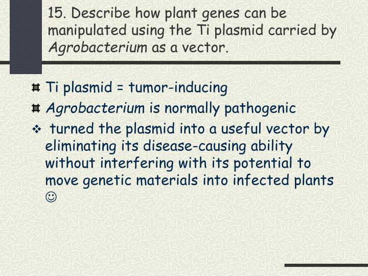 15. Describe how plant genes can be manipulated using the Ti plasmid carried by