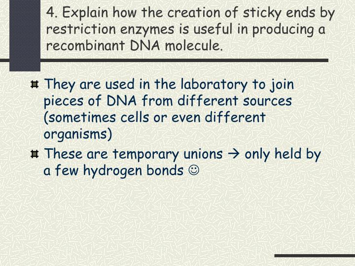4. Explain how the creation of sticky ends by restriction enzymes is useful in producing a recombinant DNA molecule.