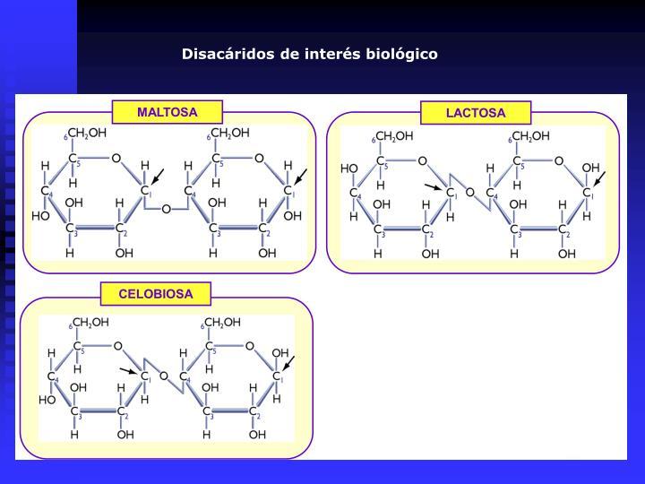 Disacáridos de interés biológico