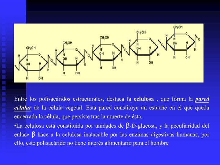 Entre los polisacáridos estructurales, destaca la