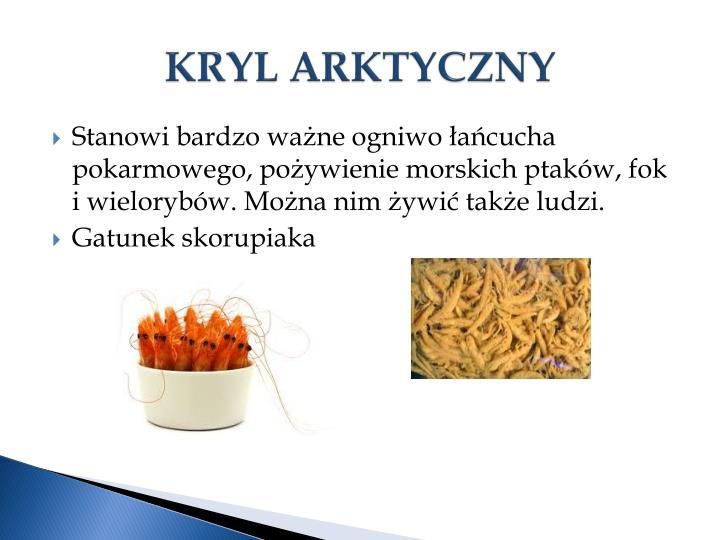 KRYL ARKTYCZNY