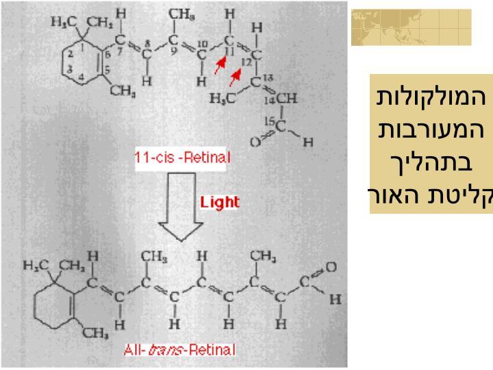 המולקולות