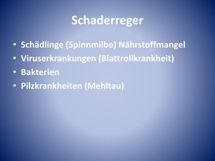 Schaderreger