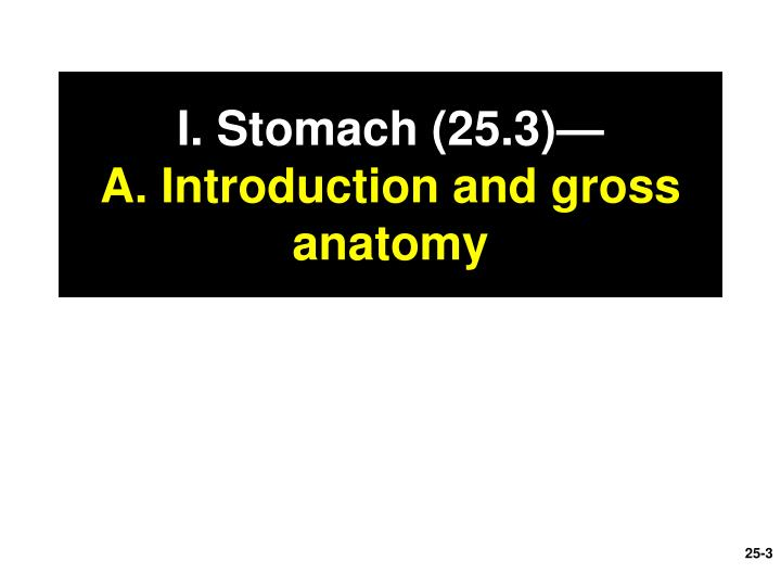 I stomach 25 3 a introduction and gross anatomy