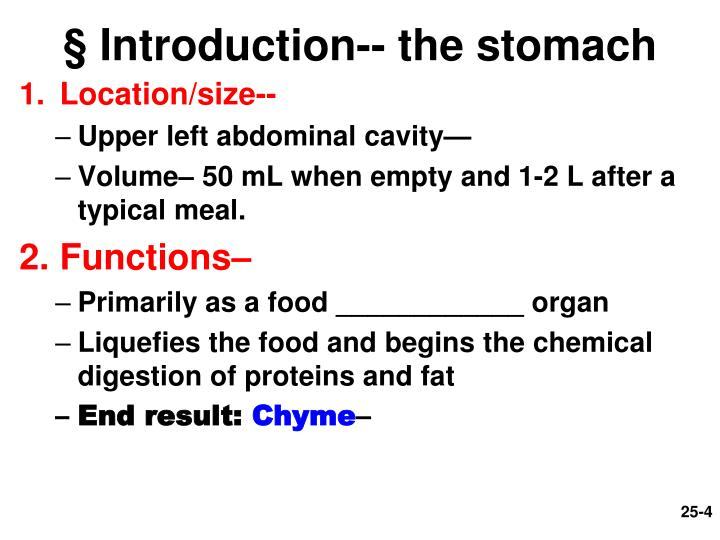 § Introduction-- the stomach