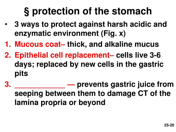 § protection of the stomach