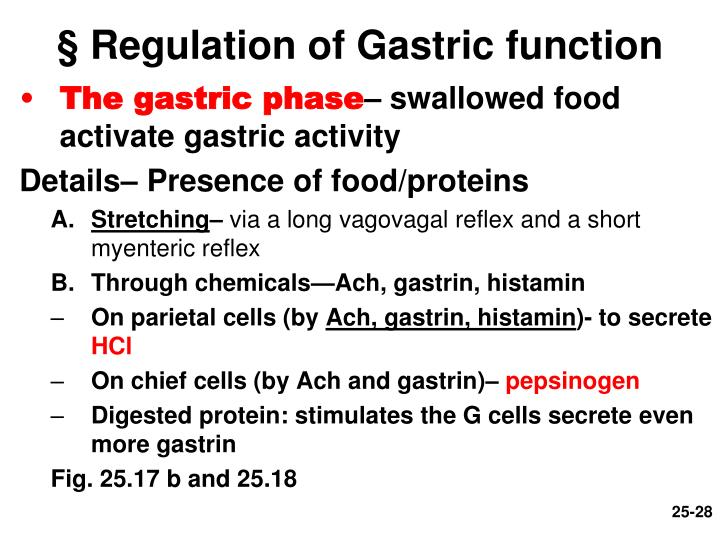 § Regulation of Gastric function