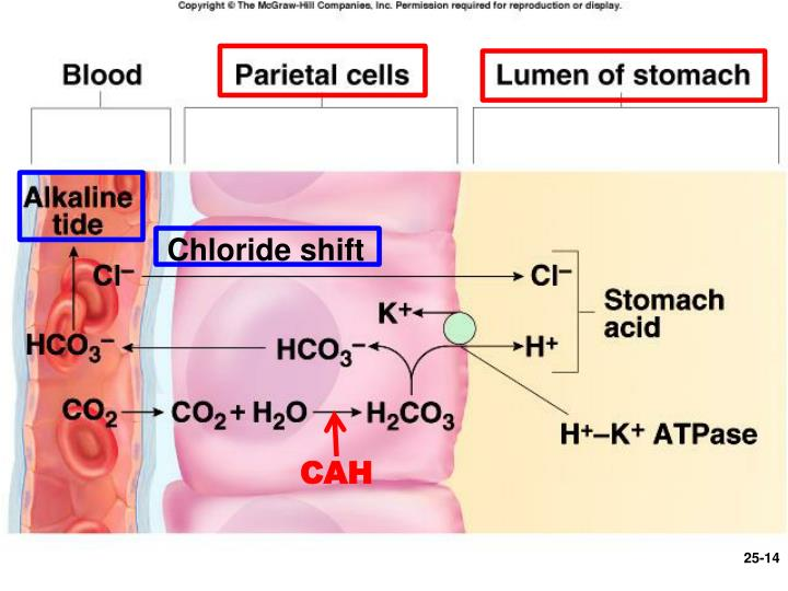 Chloride shift
