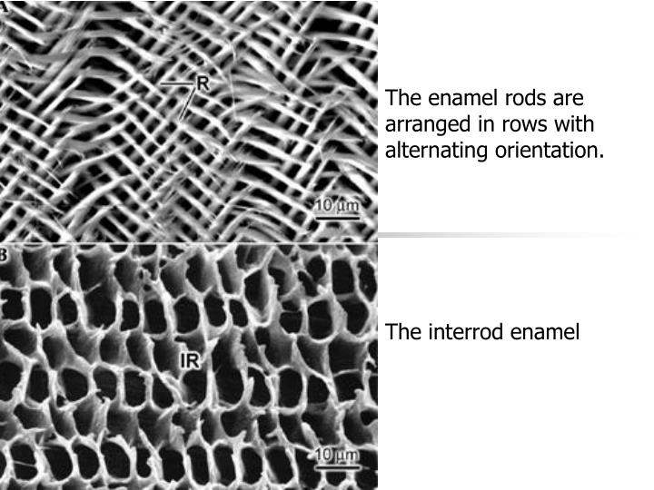 The enamel rods are arranged in rows with alternating orientation.