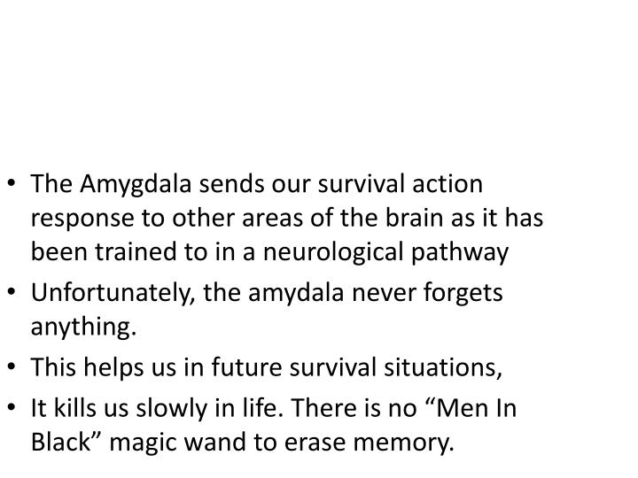 The Amygdala sends our survival action response to other areas of the brain as it has been trained to in a neurological pathway