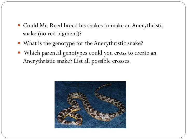 Could Mr. Reed breed his snakes to make an Anerythristic snake (no red pigment)?