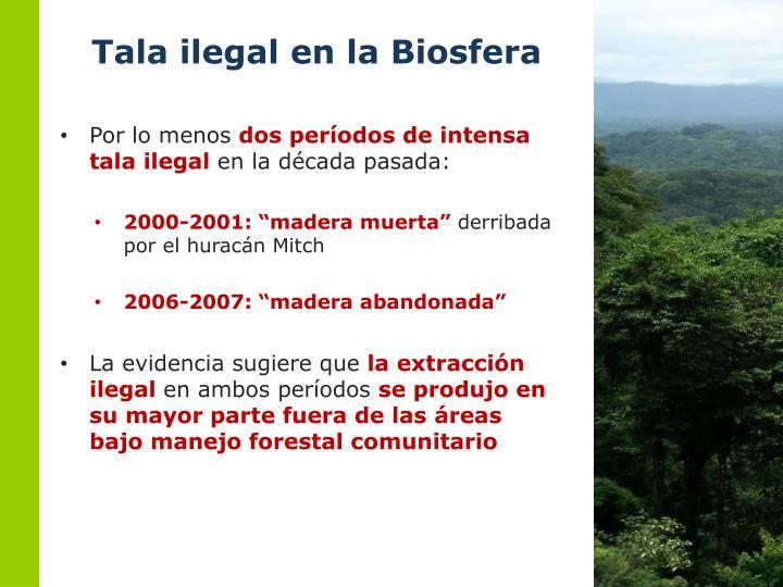 Tala ilegal en la Biosfera