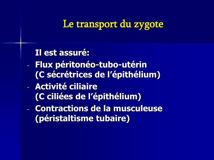 Le transport du zygote