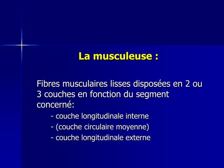 La musculeuse :