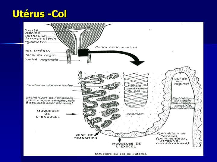 Utérus -Col