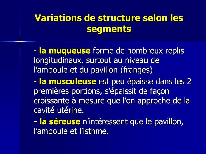 Variations de structure selon les segments