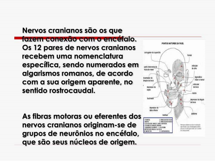 Nervos cranianos so os que fazem conexo com o encfalo. Os 12 pares de nervos cranianos recebem uma nomenclatura especfica, sendo numerados em algarismos romanos, de acordo com a sua origem aparente, no sentido rostrocaudal.