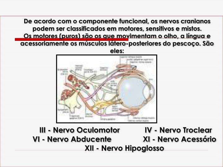 De acordo com o componente funcional, os nervos cranianos podem ser classificados em motores, sensitivos e mistos.