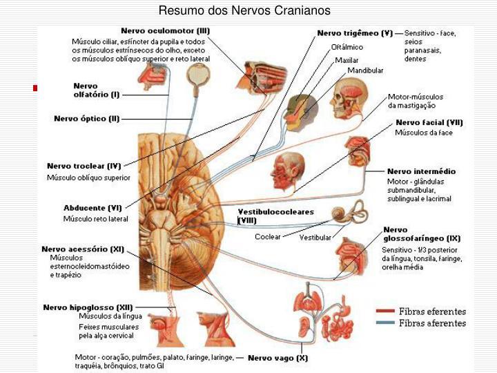 Resumo dos Nervos Cranianos
