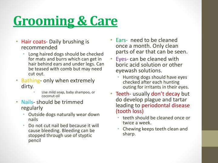 Grooming & Care