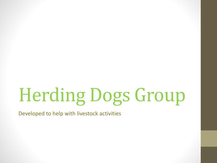 Herding Dogs Group
