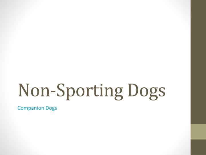 Non-Sporting Dogs