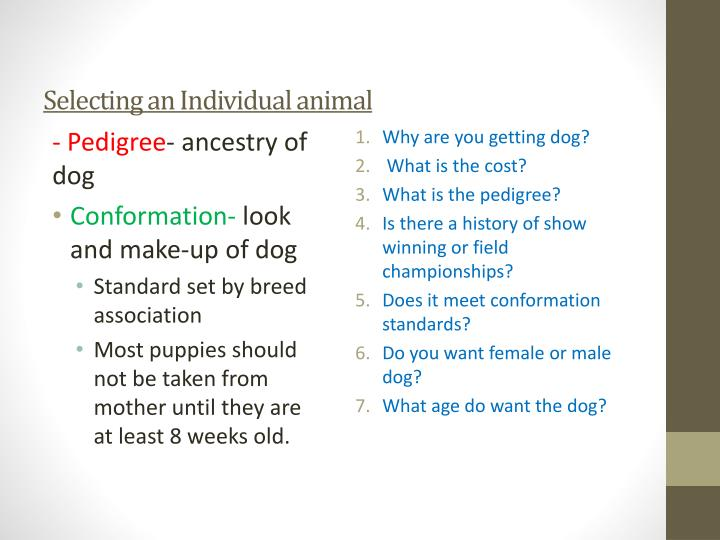 Selecting an Individual animal