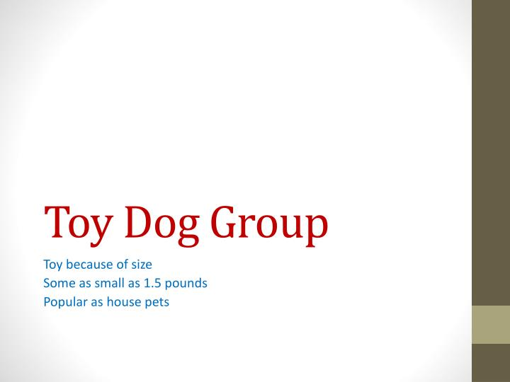 Toy Dog Group