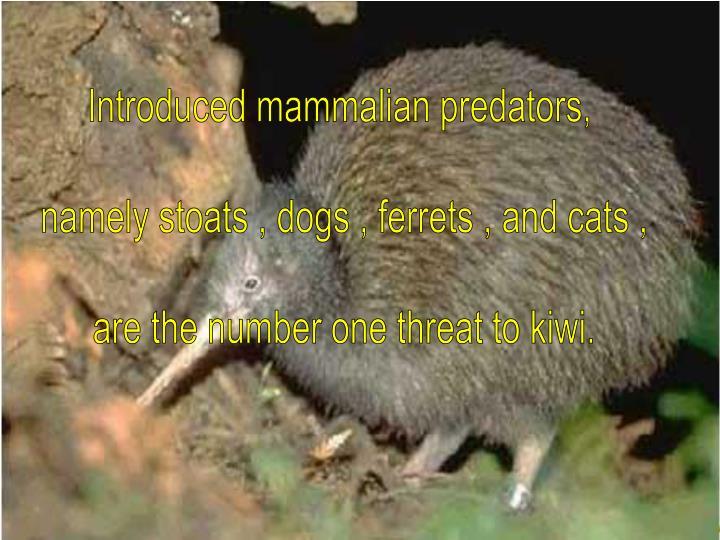 Introduced mammalian predators,