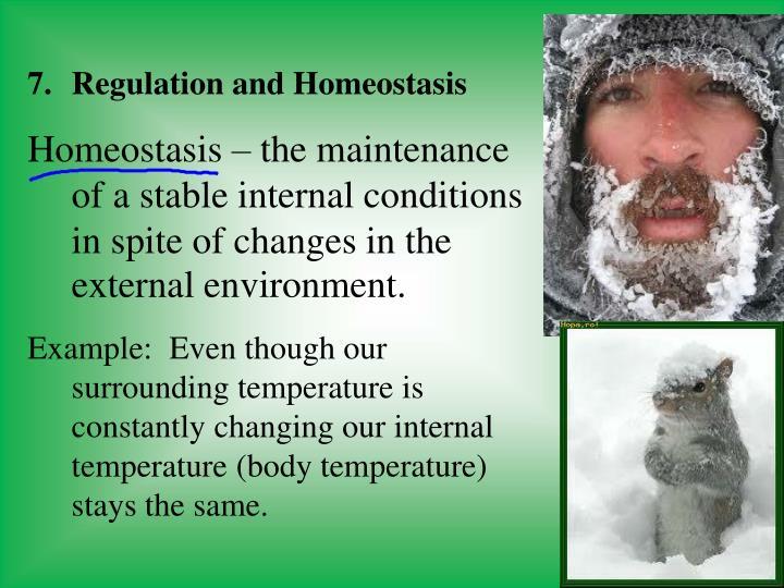 Regulation and Homeostasis