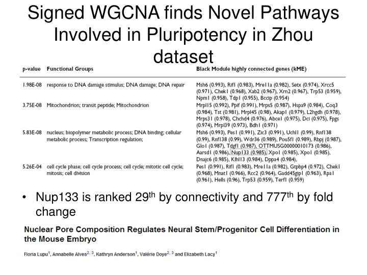 Signed WGCNA finds Novel Pathways Involved in Pluripotency in Zhou dataset