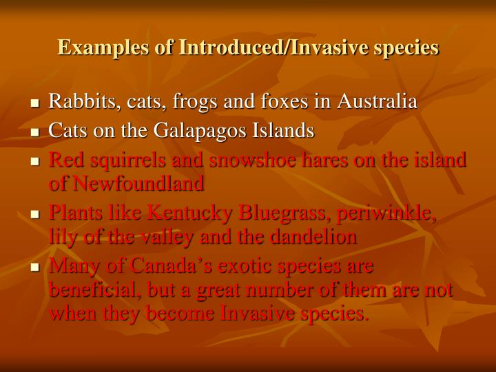 Examples of Introduced/Invasive species