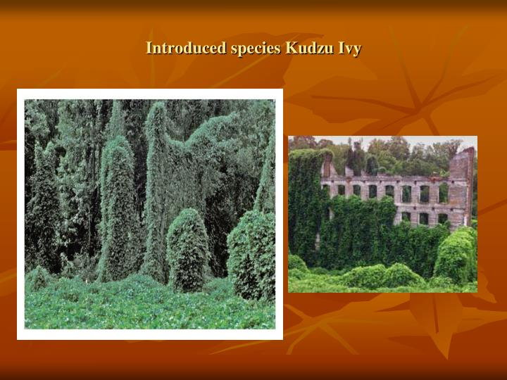 Introduced species Kudzu Ivy