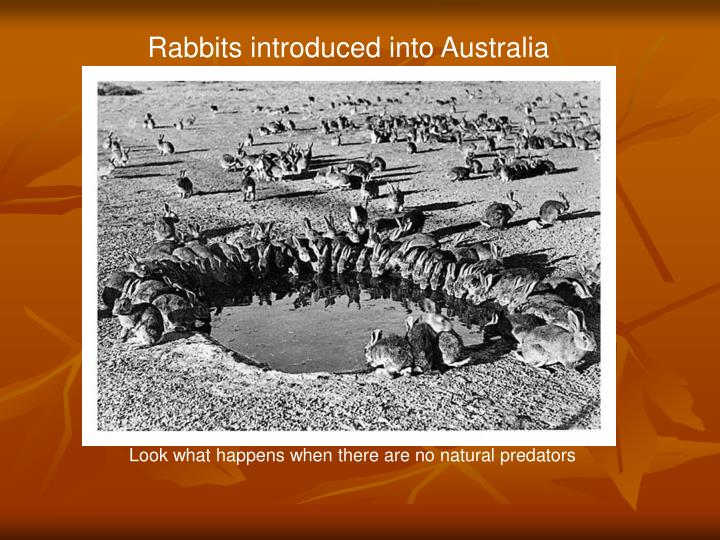 Rabbits introduced into Australia