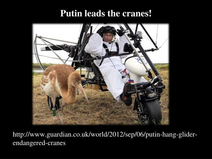 Putin leads the cranes!