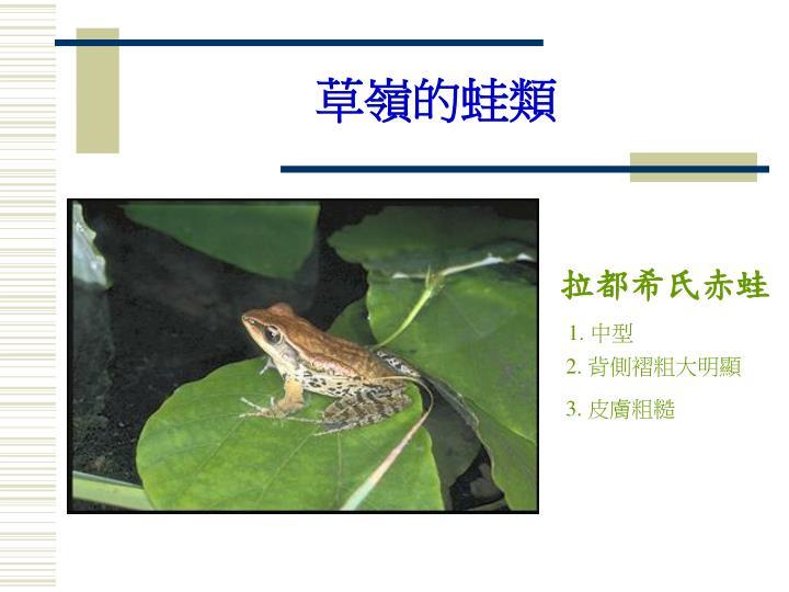 草嶺的蛙類