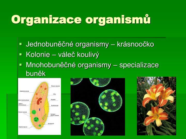 Organizace organismů