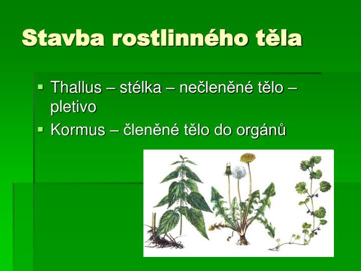 Stavba rostlinného těla