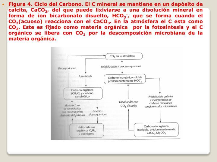 Figura 4. Ciclo del Carbono. El C mineral se mantiene en un depósito de calcita, CaCO