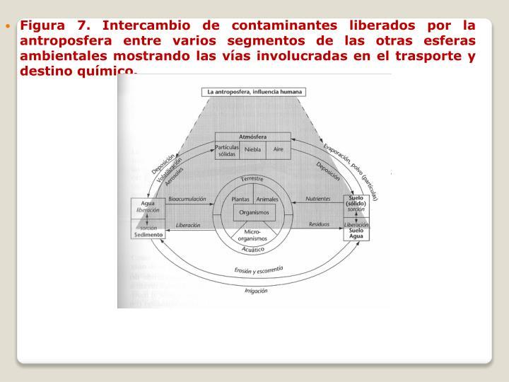 Figura 7. Intercambio de contaminantes liberados por la