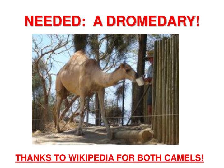 NEEDED:  A DROMEDARY!