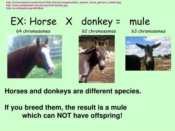 http://environnement.ecoles.free.fr/Site-chevaux/images/etalon_quarter_horse_genuine_redskin.jpg