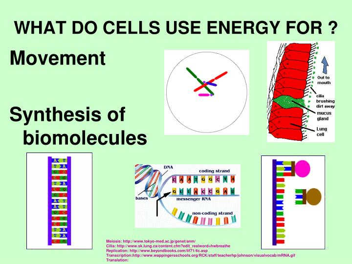 WHAT DO CELLS USE ENERGY FOR ?