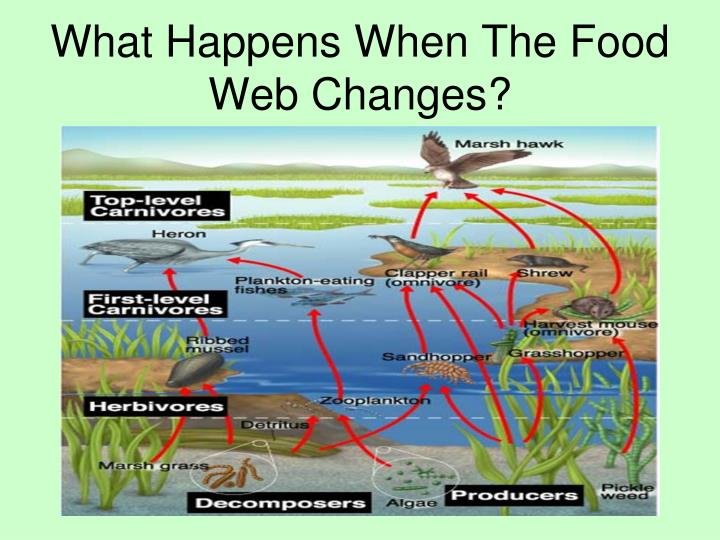 What Happens When The Food Web Changes?