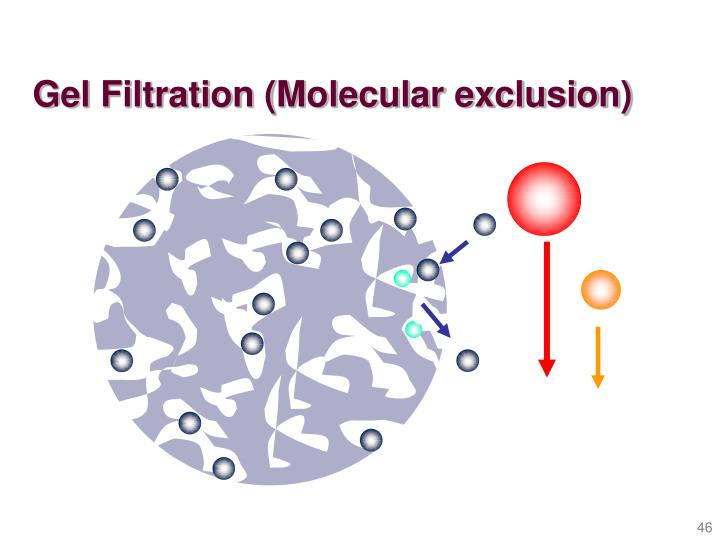 Gel Filtration (Molecular exclusion)