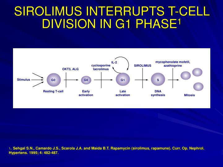 SIROLIMUS INTERRUPTS T-CELL DIVISION IN G1 PHASE