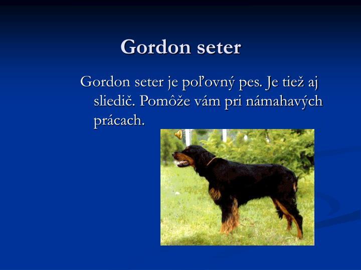 Gordon seter