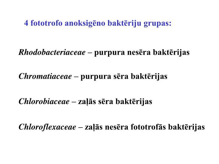 4 fototrofo anoksigēno baktēriju grupas:
